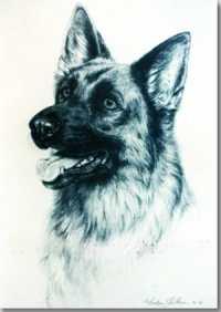 Dogs MAUREEN